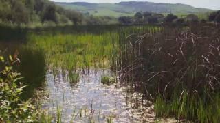 Stream Stewardship  - Santa Clara Valley Water District