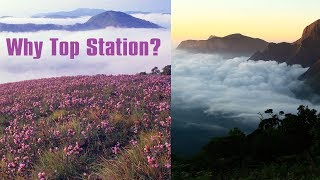 Why Top Station, the best place to view Kurinji flowers