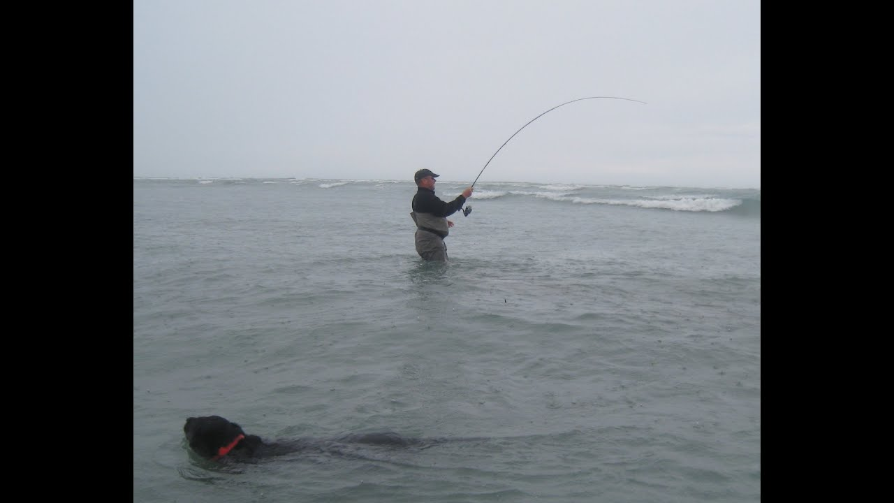 Light tackle sport fishing in new zealand youtube for Sound bound fishing