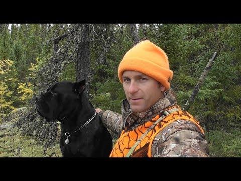 Moose Hunt 2017 Part 1