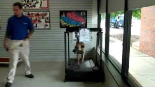 South Treadmill