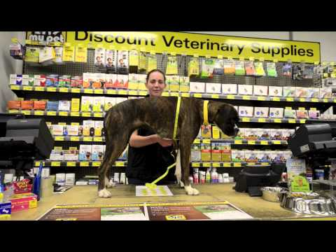 How To Measure For A Dog Coat - My Pet Warehouse