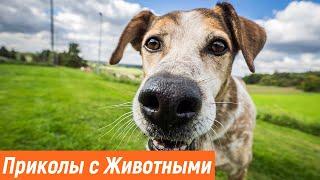 Приколы с животными Смешные животные Новые приколы 2021 Эти милые животные Видео про животных