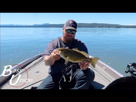 Fishing Small Mouth Country, Catching Spring Pre-spawn Bass On Almanor With A-rig's And Jerk Bait's