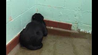 Брошенная собака сидела не двигаясь, прижавшись к стене. Когда в приюте поняли, все пришли в ярость