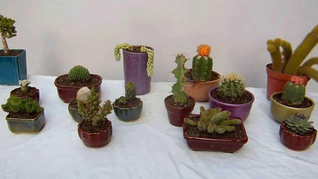 Como Cultivar Tus Cactus Youtube