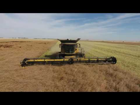 Canola harvest 2016. Canada. Delage Farms Ltd. Markusson New Holland.