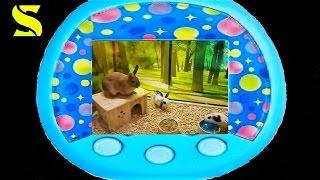 Животные!Pet Shop!!!Ищем питомца!Идем в зоомагазин!!!!Pet!Игрушки!