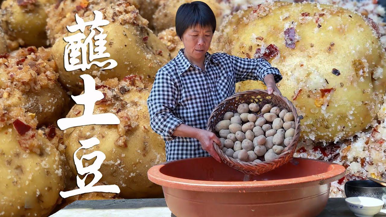 地里土豆大丰收,农村大妈做蘸土豆,整个用调料包裹,满屋飘香!【是晓晓杨呀】