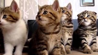 ЧУМАШЕДШЕЕ ТАНГО Funny Tango - Dancing Animals