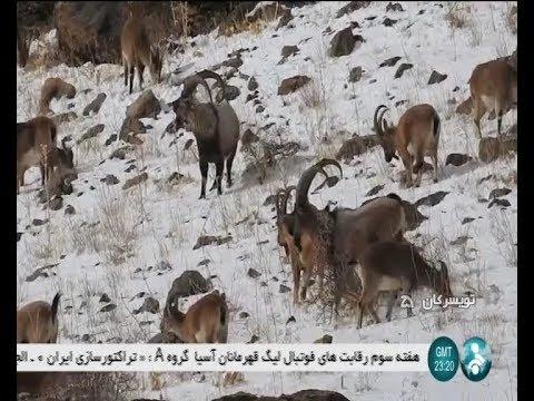 Iran KhanGormaz natural protected area, Toyserkan county منطقه حفاظت شده طبيعي خانگرمز تويسركان