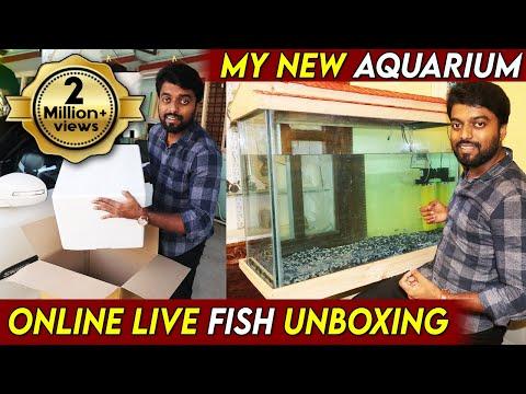 My New Aquarium Setup    எனது புதிய மீன் தொட்டியின் அமைப்பு 🐠  Avreus Aquatics