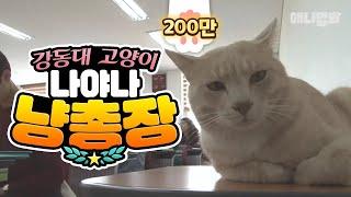 대학교 수업듣는 고양이, 집사 300명?
