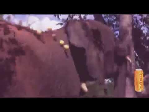 Animal enjoy in jungle