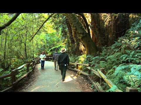 Redwood Inspirations #3