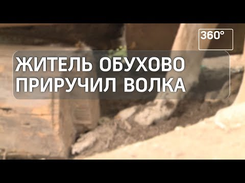 Житель Ногинского района завел волка
