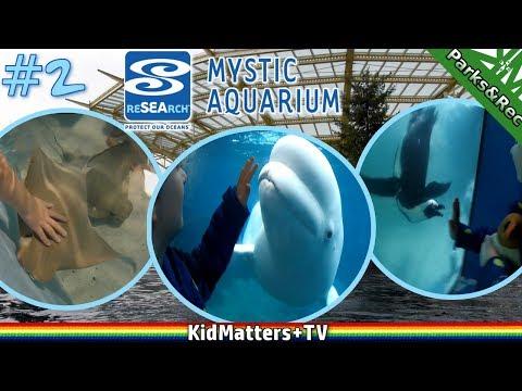 More Sea Life! A day tour of Mystic Aquarium. Part 2 [KM+Parks&Rec S01E10] [4K]