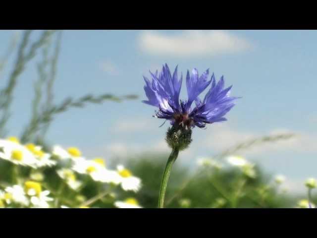 Momento · Trailer zum Hörbuch · Film von Frank Suchland