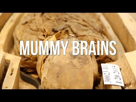 Mummy Brains