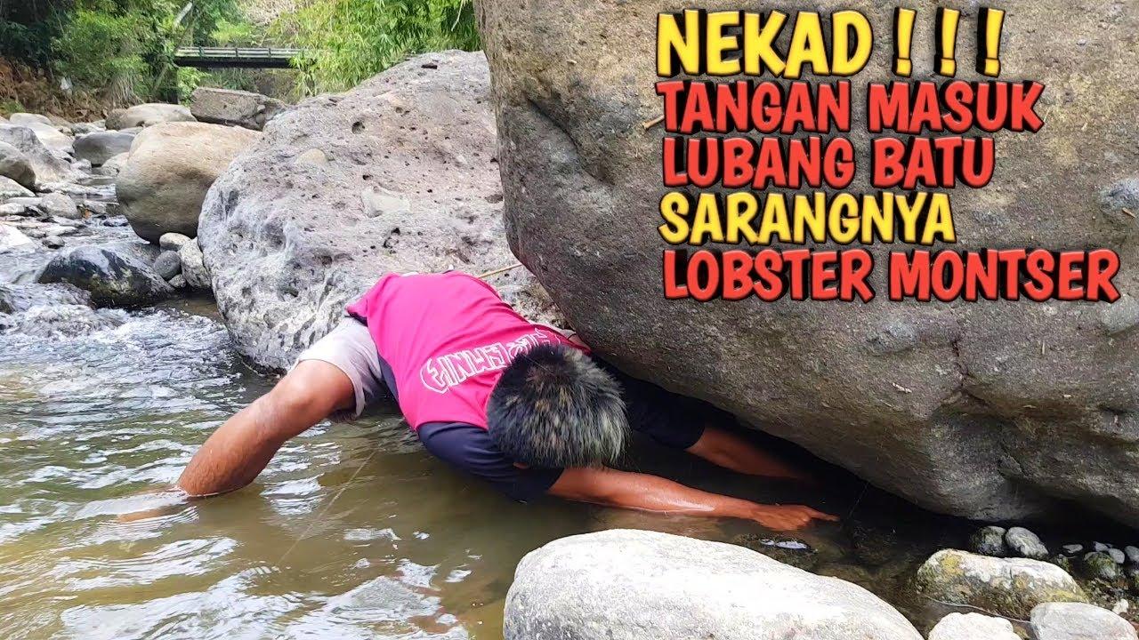 NEKAD!!! Tangkap Lobster Monster Di Bawah Batu Besar Langsung Dibakar