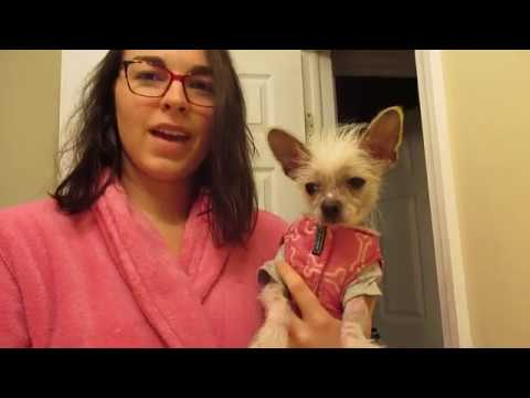 Chinese Crested skin care routine