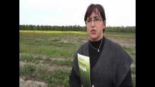Terra Sorb Complex w uprawie truskawki .wmv