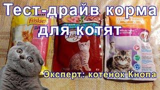 Корм для котят: тест-драйв. Влажный и сухой корм. Чем кормить котенка?