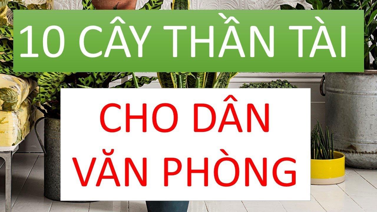 10 LOẠI CÂY CẢNH THẦN TÀI CHO DÂN VĂN PHÒNG