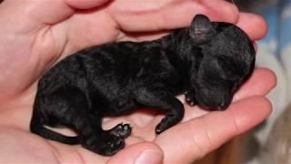 Puppy ProTech cuida de todos los cachorros
