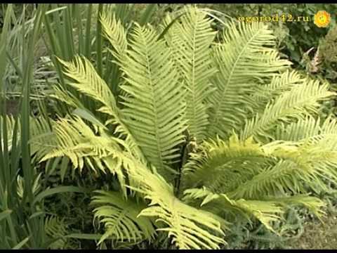 Ландшафт небольшого участка. Растения в зеленой комнате