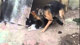 cachorro comendo a gata