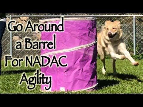 Go Around a Barrel - NADAC Agility