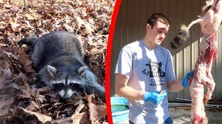 Raccoon CATCH CLEAN COOK! {Experimental}