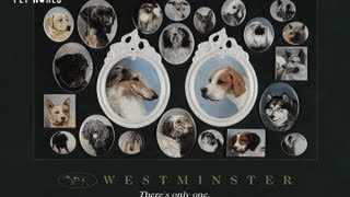 Steve Dale: David Frei on the Westminster Kennel Club Dog Show