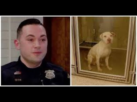Police Officers Rescue Dog Dangling From 2nd Floor Balcony After Frantic Neighbor Calls 911