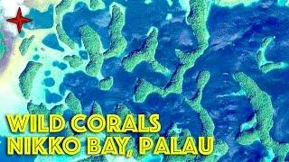 Exploring Palau's Fantastic Nikko Bay
