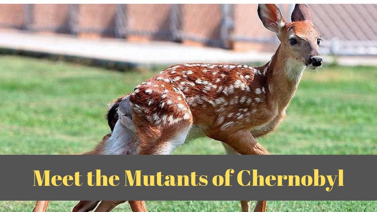 Weird Animals From Chernobyl 3
