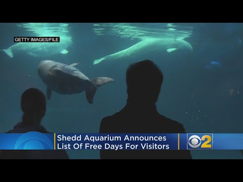 Lance Houston - Free Days at Shedd Aquarium Announced