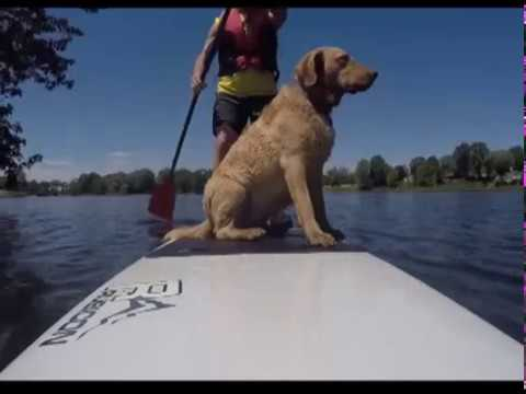 Paddling with Chessies