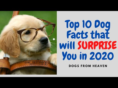 top-10-dog-facts-that-will-surprise-you-in-2020