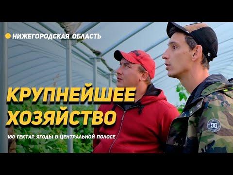 А пленку на зиму снимать с теплиц? 180 гектар - клубника и спаржа в центральной России