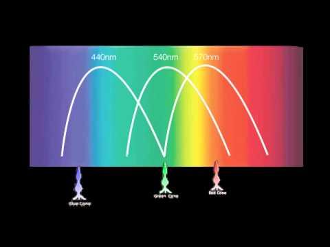 RGB Color Model - PH401 Dance of the Lightwave