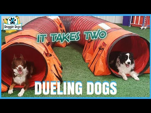 DUELING DOGS - A Dueling Banjos Parody