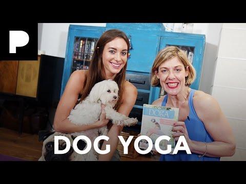 Emily Hartridge's Weird World: Doga (Dog Yoga)