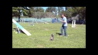 Sun. Morn. Med. - Small Dogs - Agility Demo At Hunting & Fishing Show