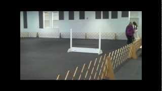 Rugby, Maltese. Udx Leg #2 At Salisbury Md Kennel Club