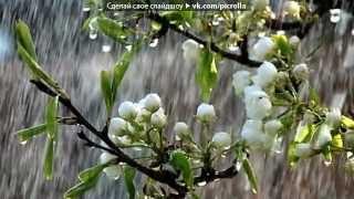 Мелодия дождя!