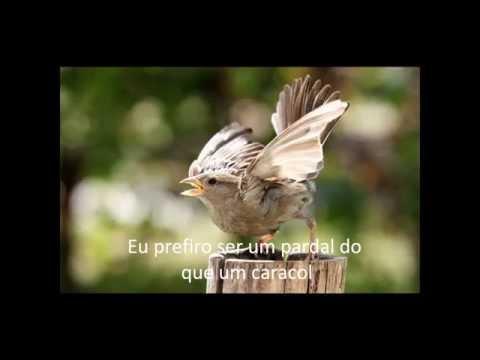 El Condor Pasa  -  Simon & Garfunkel com legenda