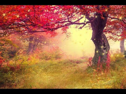 2 Hours Of Peaceful Relaxing Flute And Violin Instrumental Music By Tim Janis