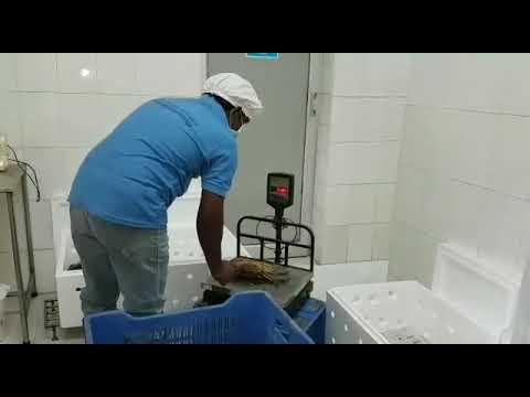 Global Fisheries  Sri Lankan Mud Crab Exports